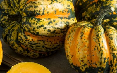 Ramping up Root Veggies – Stuffed Acorn Squash