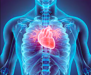 Improving Your Heart Health Naturally